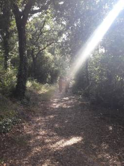 Nel bosco di lecci